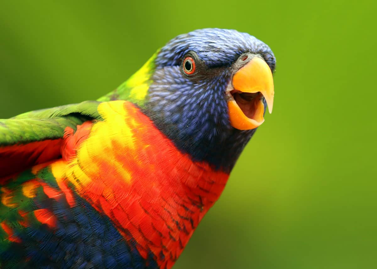 Most colorful birds on the planet