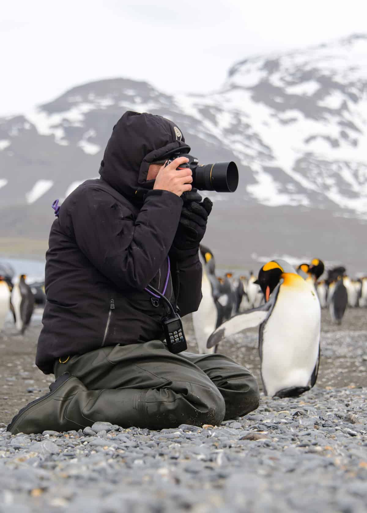 How to Choose the Best Camera for Wildlife Photography (Birding ...
