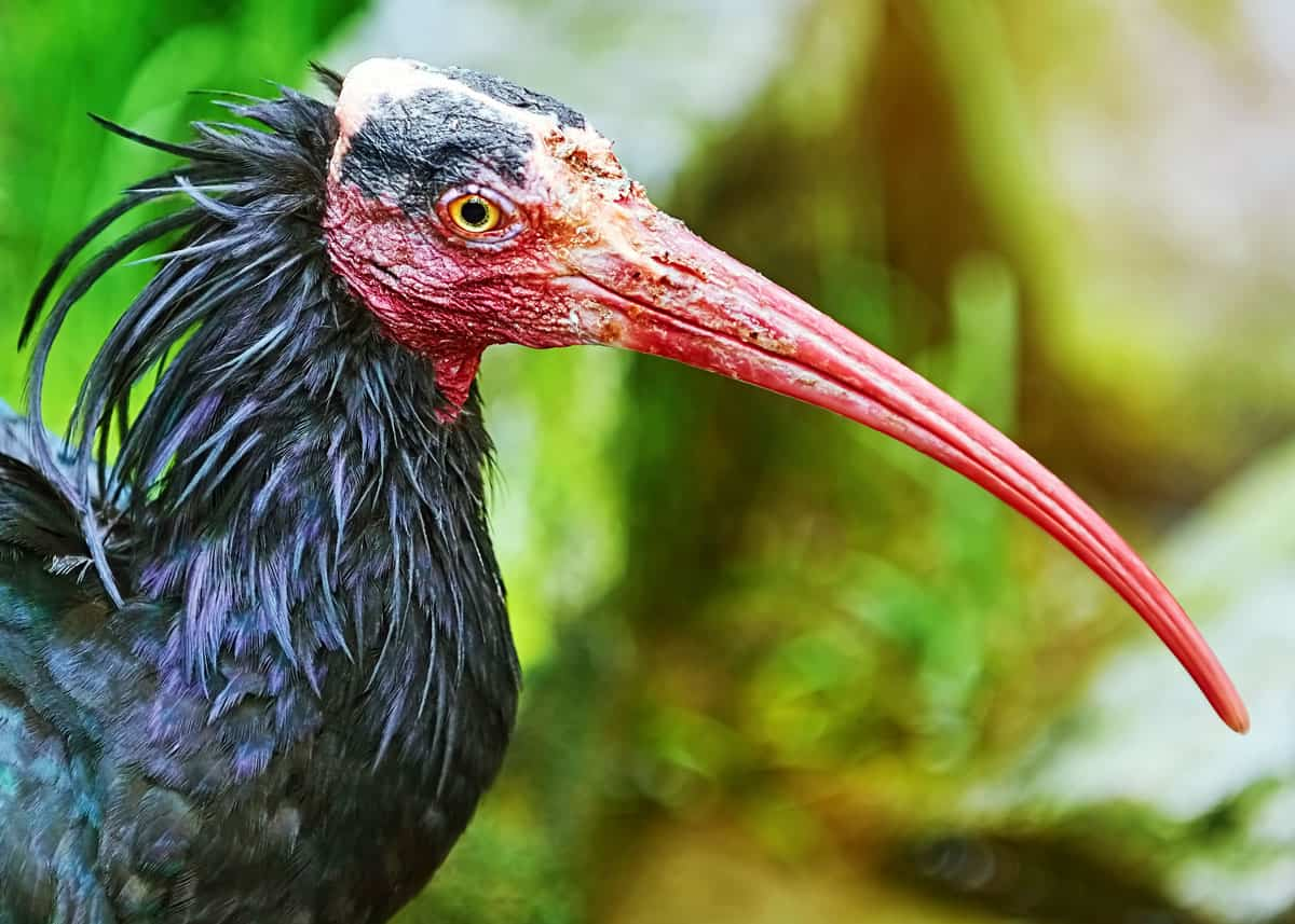 Most ugly birds in the world