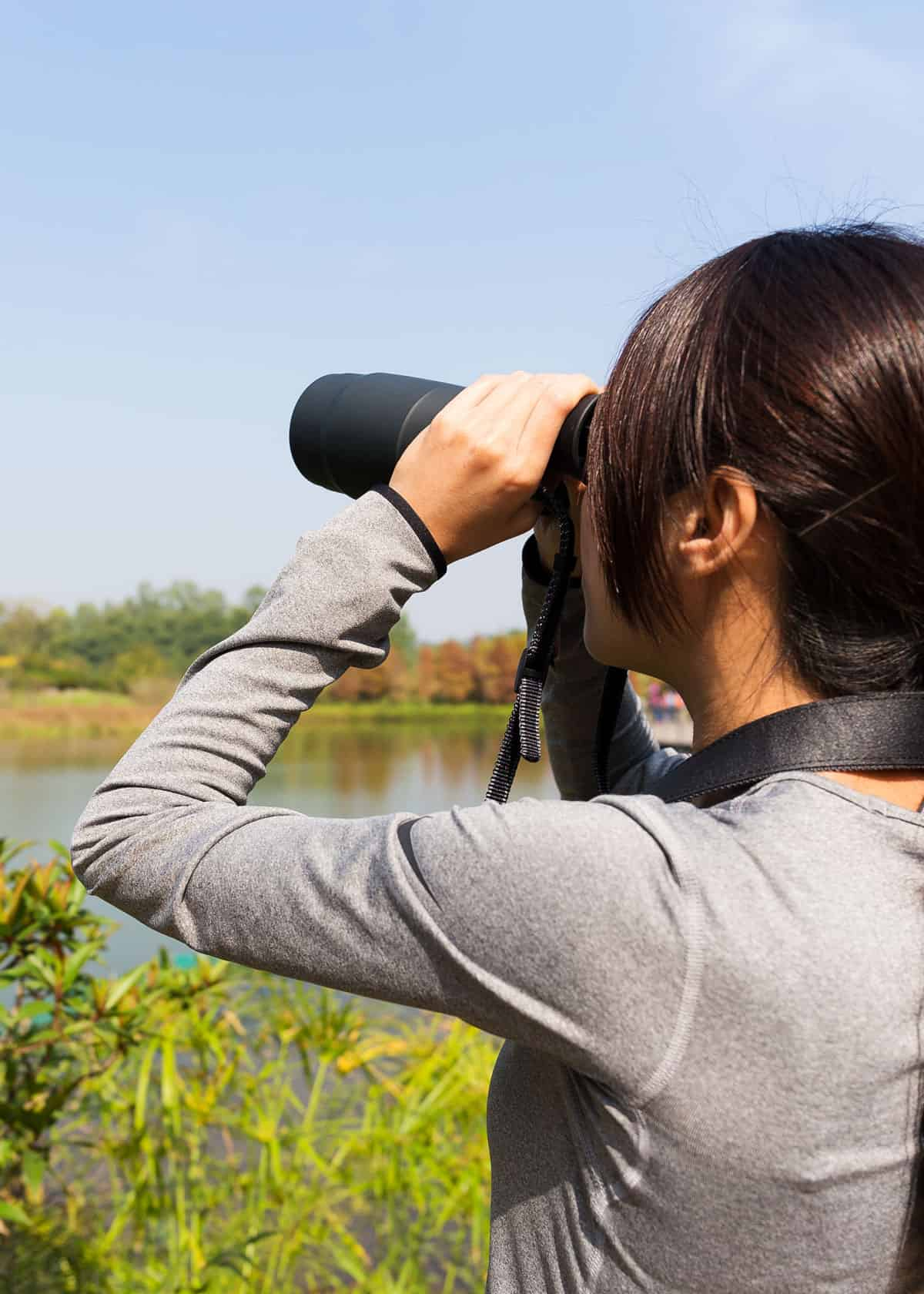 Gifts for bird watchers